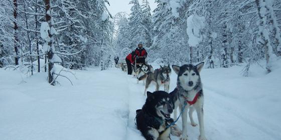 100km a -30° nelle foreste della Lapponia finlandese per diventare musher